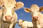 Video Tiervideos Tiere