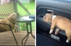 17 foto esilaranti di cani che si sono addormentati nelle situazioni e nelle posizioni più assurde