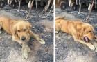 Dieser Hund hat sein Lieblingskuscheltier in den Trümmern des durch australische Brände zerstörten Hauses gefunden