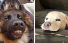 24 foto divertenti di cani che con i loro