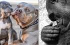 21 photos d'animaux aux prises avec leurs petits montrent combien le travail de parent est beau et difficile