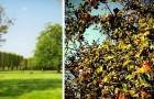 Kopenhagen plant fruitbomen langs de weg: een nuttig initiatief om iedereen gezonde producten te geven