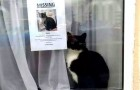 Un gatto smarrito viene ritrovato proprio accanto al volantino che ne annunciava la scomparsa