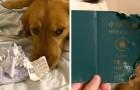 Deze hond eet het paspoort van zijn baasje op die naar Wuhan zou vertrekken, en