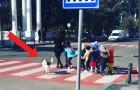 O cachorro para o tráfego para permitir que as crianças de uma escola atravessem a rua