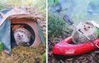 Le adorabili foto di questo riccio in campeggio lo hanno reso una celebrità del web