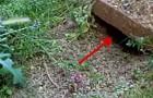 Mette una mano davanti a un buco nel terreno, guardate cosa ne esce!