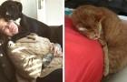 15 bezaubernde Tiere, die nicht aufhören, die schwangeren Bäuche ihrer Besitzer zu kuscheln