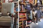 Video Video's over boeken Boeken