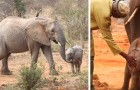 This elephant mom returned to the shelter to present her calf to the volunteers who rescued her