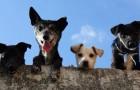 L'ex-mattatoio di Firenze è stato trasformato in una struttura di accoglienza per animali in difficoltà