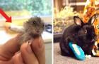 Questi 6 animaletti con mini-fasciature alle zampe mostrano il lato più adorabile del lavoro di veterinario