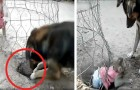 A dog digs a hole to free a little monkey kept in a wire cage and after a lot of effort he manages to free it