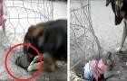 De hond graaft een gat om het kleine aapje te bevrijden die opgesloten in een kooi zit: na een lange klus weet hij haar te redden