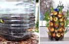 Il trucco efficace e a costo zero per coltivare cipolle direttamente in casa senza occupare troppo spazio