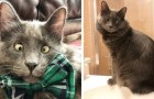 Diese Katze mit Strabismus ist dank ihrer Liebenswürdigkeit ein echter Star im Netz geworden