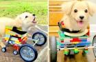Er kann seine Vorderpfoten nicht benutzen, also baut ein Kind einen Legorollstuhl für seinen Hund