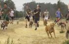 I ragazzi di questa squadra di atletica portano i cani di un rifugio a correre con loro durante gli allenamenti