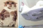 Auf Glastischen liegende Katzen: 10 Beispiele, in denen die Besitzer der Versuchung nicht widerstehen konnten, sie zu fotografieren