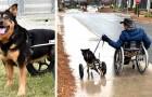 6 Jahre lang wollte niemand diesen behinderten Hund adoptieren, bis ein Mann im Rollstuhl ihn mitnahm