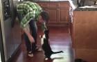 Deze kat weet hoe hij moet vragen om een knuffel