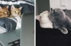 13 foto di gattini innamorati mostrano che le relazioni più belle si basano sulla semplicità