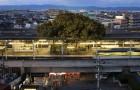 In Japan werd dit treinstation gebouwd rondom een 700 jaar oude boom