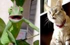 15 animali dallo sguardo talmente sorpreso che non hanno potuto fare a meno di spalancare la bocca