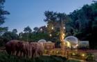 Dans ce resort en Thaïlande, vous pouvez séjourner dans une bulle transparente entourée d'éléphants sauvés de l'exploitation