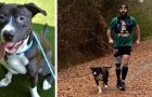 A stray dog spontaneously joins a marathon and after the race, the athletes help him find a family
