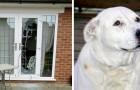 Dieser Hund zerbrach das Fenster des Hauses und rettete zwei wehrlose Frauen vor häuslicher Gewalt
