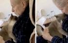 Den här gulliga lilla kattungen tröstar sin Alzheimersjuka ägare varje dag och överger honom aldrig