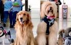 Deze luchthaven heeft 22 therapiehonden