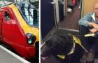 Personne dans le train ne laisse sa place à cet homme malvoyant avec un chien guide : il a été forcé de s'asseoir par terre