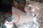 Eine Katze besucht im Zoo ihren besten Freund