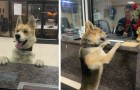 This dog showed up at the police station to file a