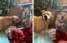 This cute little dog can't stop staring at his portrait when his family shows him