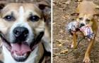 La historia de Max, el perro juguetón que desde hace 9 años no logra encontrar una familia adoptiva