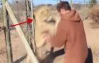 Un hombre abre el recinto de un leon y esta es la fantastica reaccion