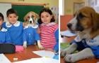Un cachorro callejero es adoptado por una escuela: los alumnos se responsabilizan cuidándolo