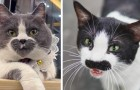 17 cats who look like they could be in a
