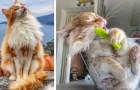 Une fille a immortalisé son beau chat dans les poses les plus curieuses, faisant de lui une véritable star du web