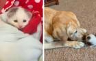 Este perro de 12 años ha adoptado una gatita huérfana recién nacida: entre los dos ha habido amor a primera vista