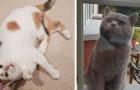 Questo gatto si presenta ogni giorno a casa della sua