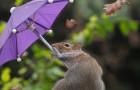 Un fotografo immortala uno scoiattolo che
