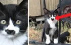 This stray kitty has a black cat-like birthmark on its muzzle that has made it a true web celebrity