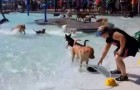 Before the winter closure, this Park hosts a very special pool party !