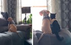 L'amicizia fra cane e gatto in tutta la sua tenerezza: il cucciolo abbraccia letteralmente il suo amico felino