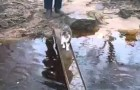 Alleen een kat kan z'n grappige methode bedenken om de rivier over te steken