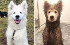 14 foto di cani che hanno appena scoperto la gioia di rotolarsi in una pozzanghera di fango